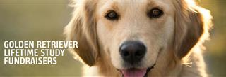 Golden Retriever Lifetime Study Fundraisers